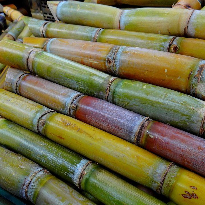 sugar-cane-276242_960_720